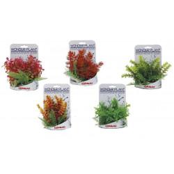 Rastlinka Wonder 15-18cm